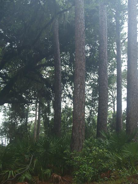 Woods near lighthouse
