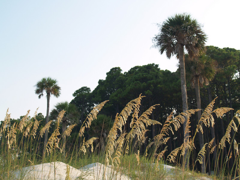 View of Hunting Island from Northeast