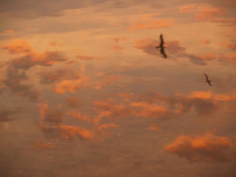 Pelicans reflected in sea, sunrise