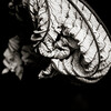 Trumpet Leaf