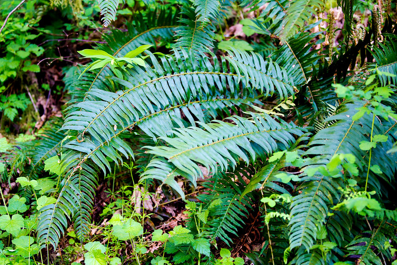 Ferns are also ubiquitous here.