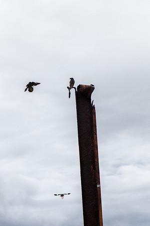 Roratonga birdlife