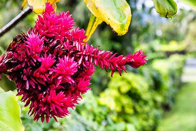 Roratonga wildflowers