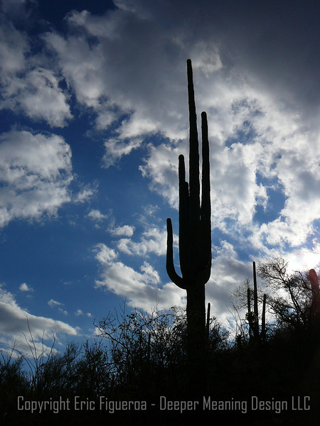 """Sonoran Giant""  - Tucson, Arizona"