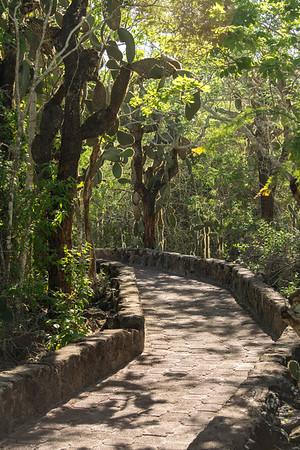 Pathway to Playa de tortuga