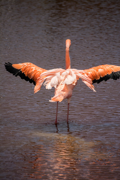 Flamingo stretching