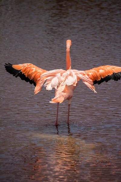Flamingo stretching