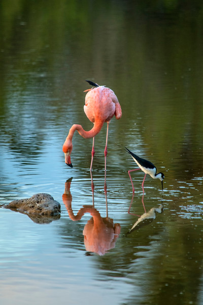Flamingo and Stilt