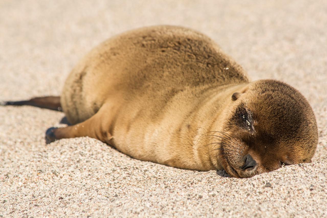 San Cristobal, Galapagos Islands