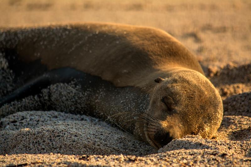 Baby Sea Lion sleeping in the sun
