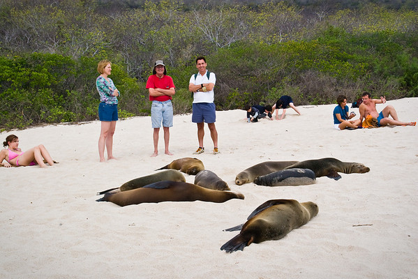 Homo Sapiens share the beach with the  Sea Lions
