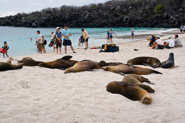 You share the beach with the Sea Lions
