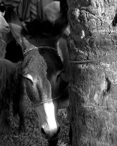 The 'Goat Souq', Nizwa. Oman