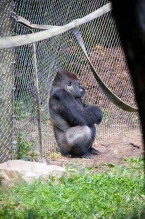 Milwaukee County Zoo; 6/29/09