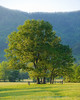 Late day in Cades Cove.