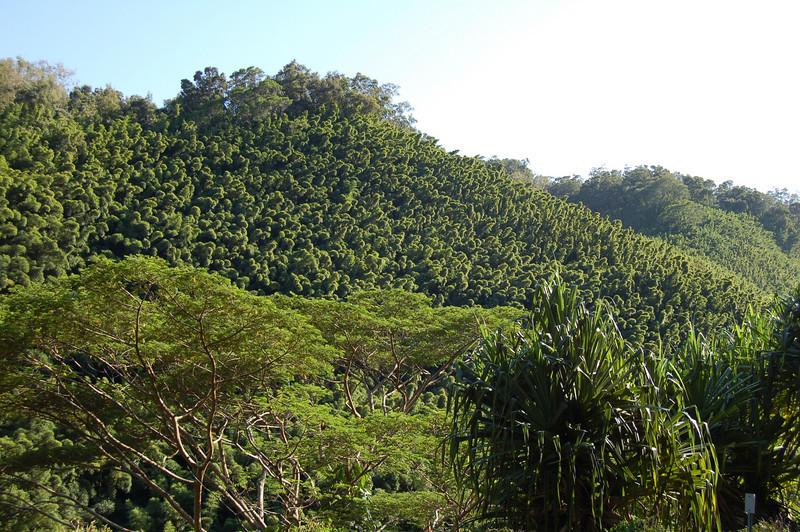 Near Kahalau