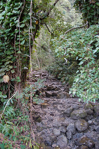 Near the Waikamoi Trail