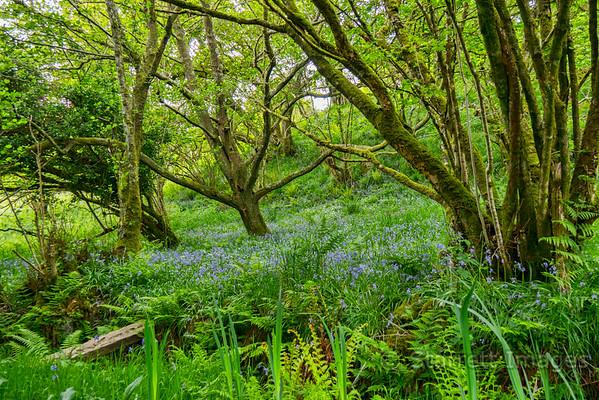 Rainforest near Crinan