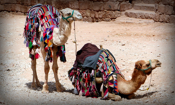 Alternative to walking in Petra...