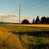 Canola Farmland