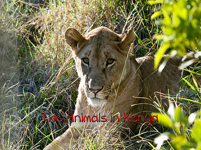 Kenya Experience - Animals