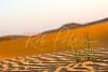 UAE Desert Plant