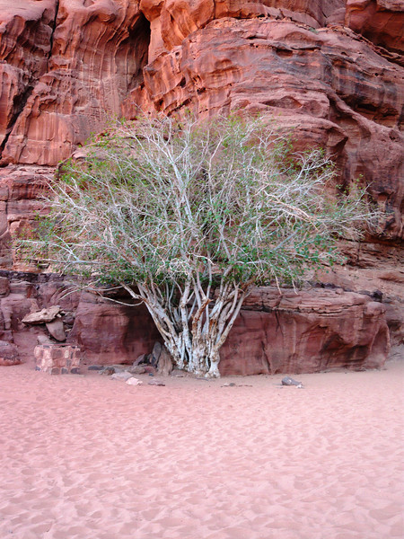 This little tree was so cute all cuddled up to the rock for protection.