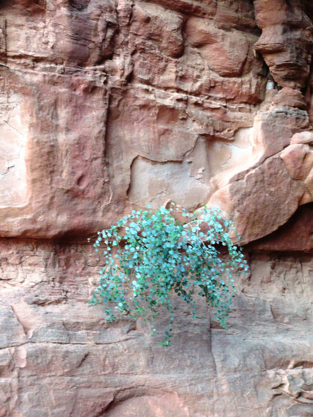I thought this little clump of green brush growing out of the rock was really sweet.