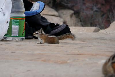 Chipmunk Attack