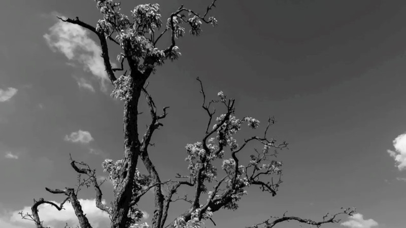 "Timelapse video of clouds floating over de ""Tweede Molen"" near Cabauw, The Netherlands"