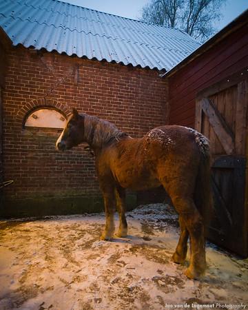 Kasper the horse