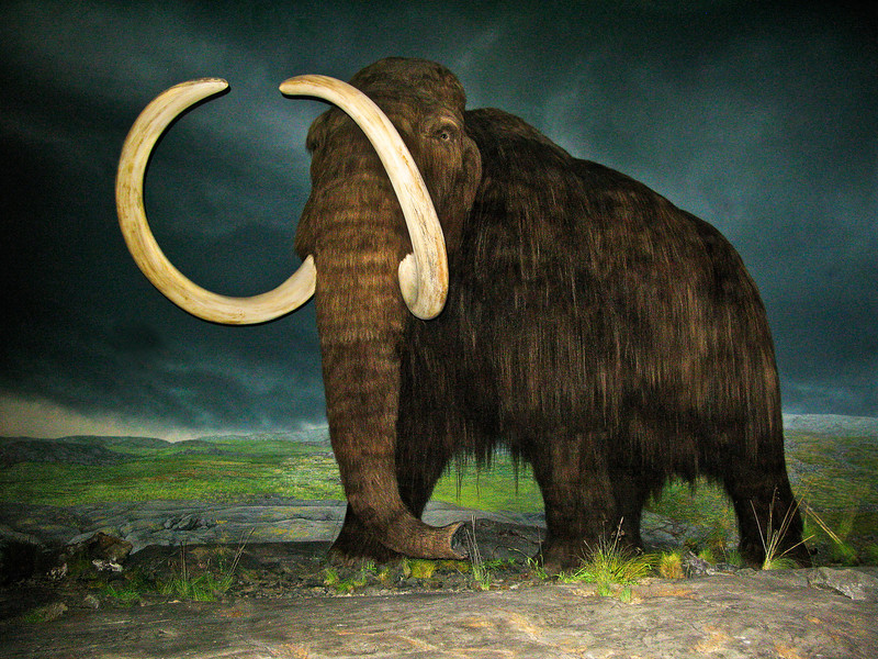 Wooley Mammoth, Royal British Columbia Museum