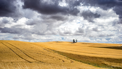 The Palouse ~ August 2016-03698