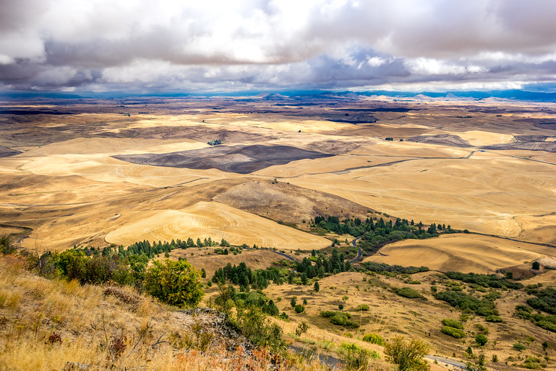 Winding Road.  The Palouse from the top of Steptoe Butte.