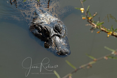 From a bridge along the way--our first of hundreds of Caiman