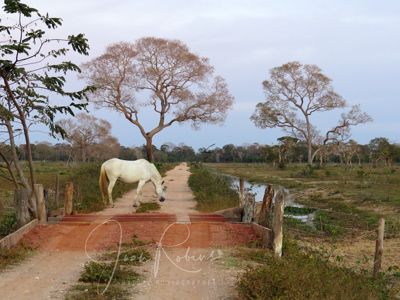 Early morning August 8, 2013 as I set off for a walk in the Brazil Pantanal.