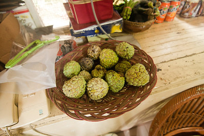 Custard apples! Freshly picked from Aires family's tree. August is the best season for this fruit in the Philippines.