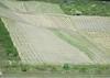 A very steep vineyard
