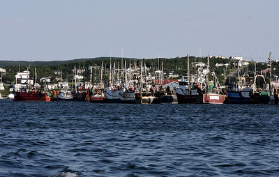 Fishing trawlers in St. Anthony harbour