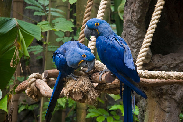 Florida 2008: Disney Animal Kingdom