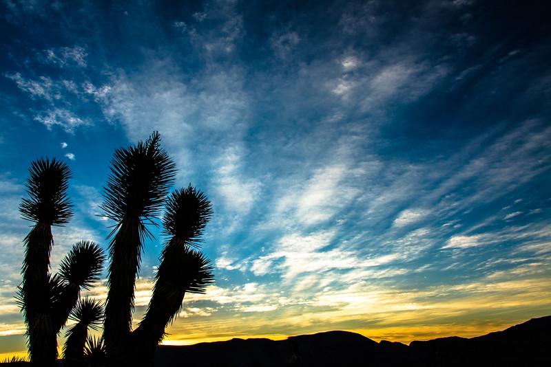Sunrise-Up