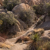 Desert trails, Joshua Tree National Park, CA