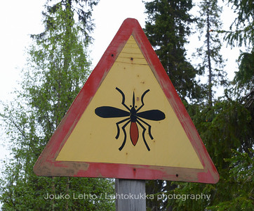 Tankavaara - Gold museum: Mosquito warning