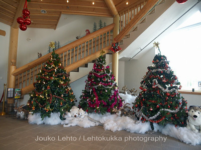 Arctic Circle and Santa Claus land: Christmas trees