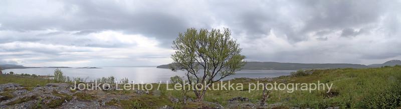 Porsangen fjord, Finnmark, Norway, June 2008