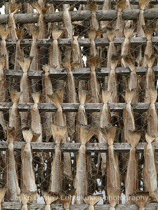 The drying cods