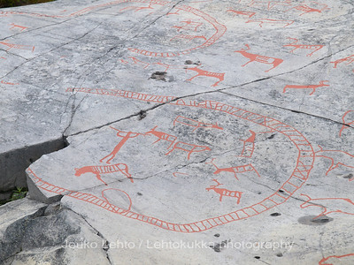 Rock carvings -  deers, reindeer fence, herd etc, : painted over for easier observation