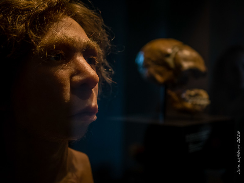 Neanderthal Likeness reconstruction from a skull