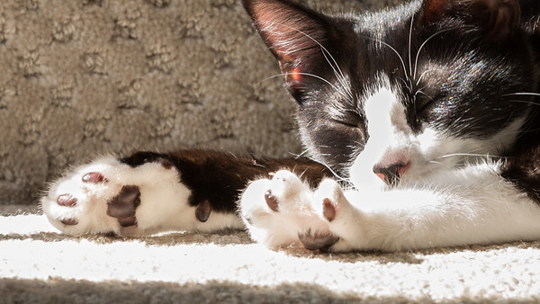 Domino paws