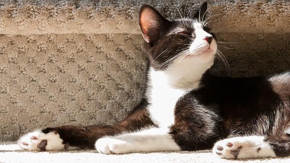 "Dan & Caroline's cat: ""Osita"""